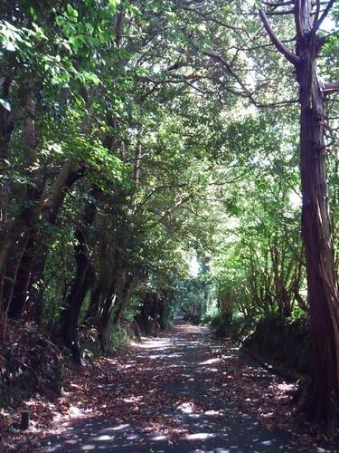 椎の原生林